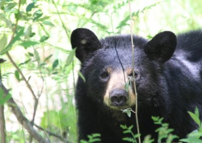 Bear Photographed Near Property
